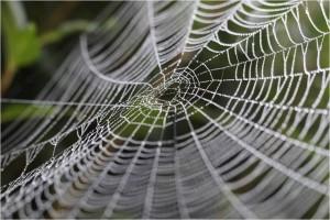 Graphene_SpiderWeb